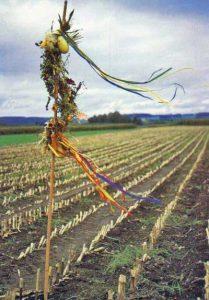Hegewisch im Maisfeld
